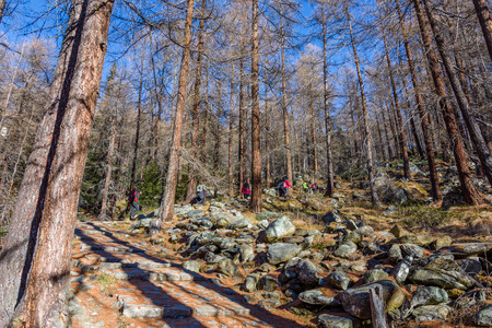 Group of hikers trekking in the mountains of the Alps. The trekkers are going through a forest in Val d'Ayas on Valle dAosta. Italy Redactioneel