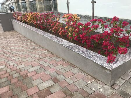 Constructed concrete block work planter box with Beautiful plants and flowers near staircase entrance and stairs with Stainless steel handrails and glass panels tempered for elegant entrance at office Фото со стока