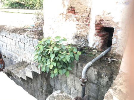 a tree has grown at the steps of an water well which ll be used for farming or agriculture works in an indian village Stock fotó