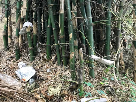 Lot of bamboo trees are grown in an dense forest and looks so strong and dark green