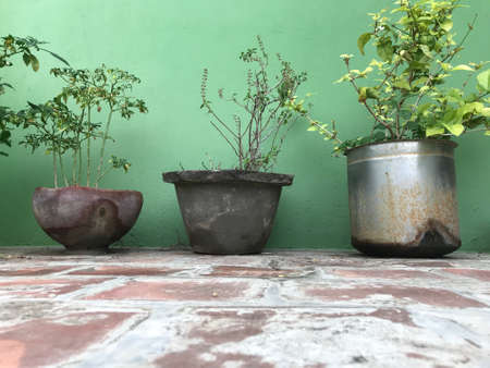 Green plants are growing in pots which are re usable in our home outdoor or front side gardening purpose