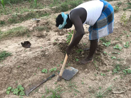 Black skin man working in an agriculture land for planting trees for future cultivation or fruits