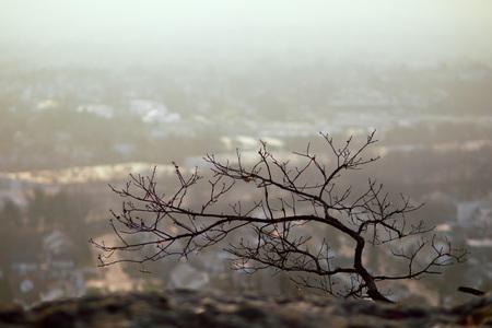 岩の上のツリー