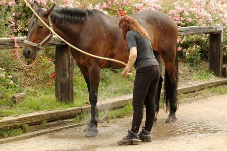 femme et cheval: Une femme lave les pieds des chevaux.