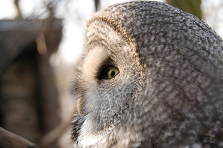 The owl is a symbol of wisdom. Stock Photo - 9530939