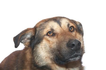 Dog on the white background Stock Photo - 4167621