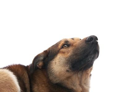 Dog on the white background Stock Photo - 4368172