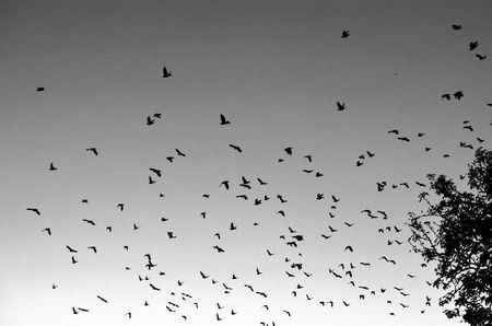abstract birds: Abstract birds
