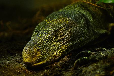reptile: reptile Stock Photo