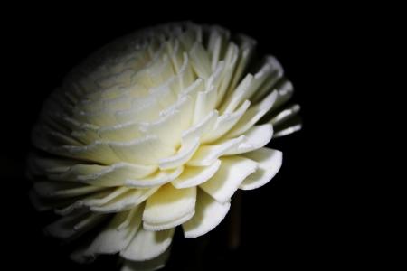 white flower isolated on black