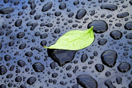leaf on car after rain-backgrounds