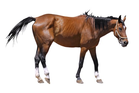 nostril: Isolated horse