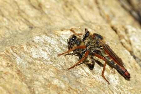 hymenoptera: Hymenoptera and bee