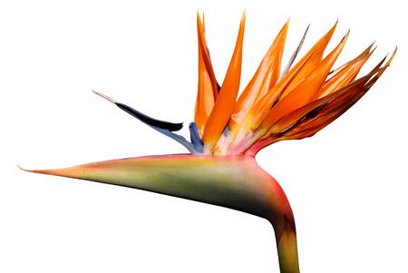 Oiseau de paradis de fleurs Banque d'images - 1637932