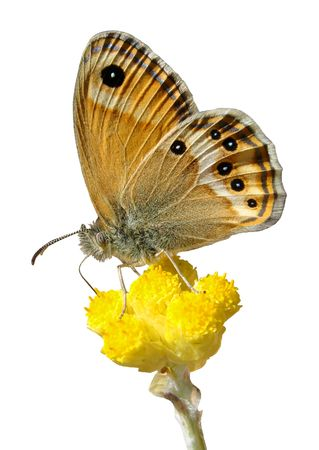 animal vein: Isolated butterfly on flower
