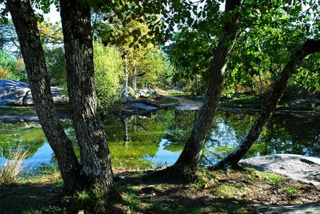 Pond in the forest of Fontainebleau Imagens