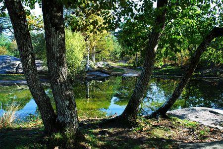 Tang en forêt de Fontainebleau Banque d'images - 2301187