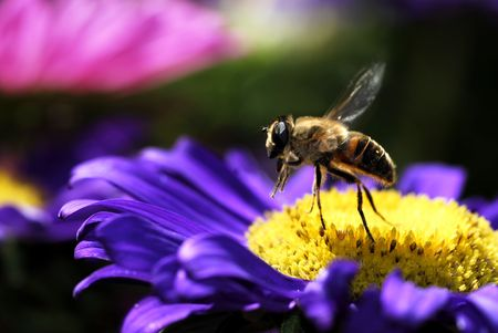 Honey bee in flight Stock Photo - 2479944