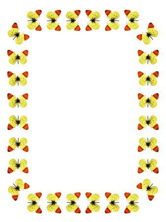 anthocharis: Frame morocco orange butterfly Stock Photo