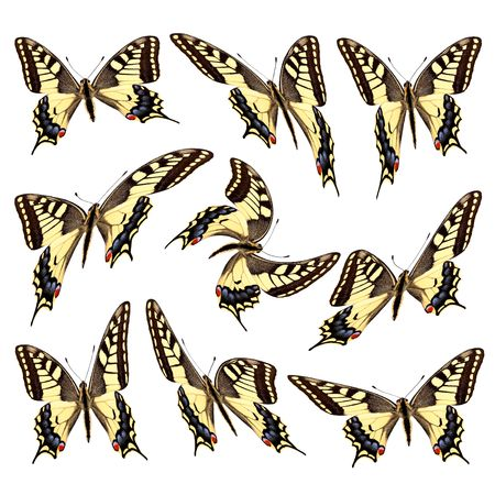 takeoff: Takeoff swallowtail butterflies