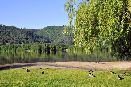 Lac Chambon in France with mallard ducks on grass in foreground, department of  Puy de Dôme in the Massif Central