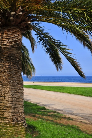alpes maritimes: Palm tree and mediterranean sea at Menton in France, region Provence, department Alpes Maritimes