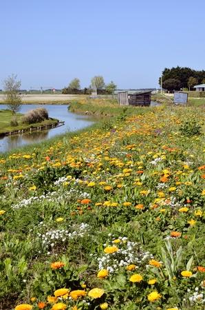 Campo florido en Noirmoutier en LIle en Pays de la región del Loira, en el oeste de Francia Foto de archivo - 11208962