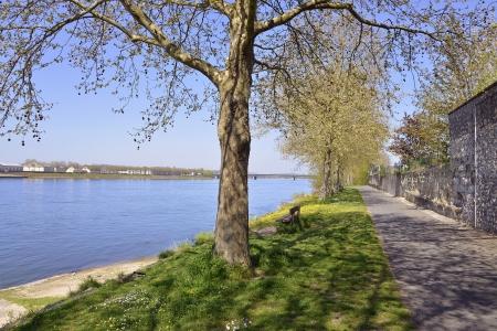 commune: The banks of the Loire river at Saumur with trees, commune in the Maine et Loire department , Pays de la Loire region in western France