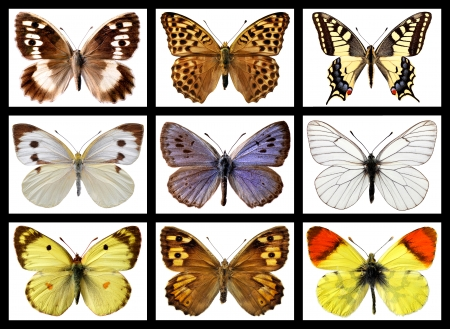 Nine mosaic photos of french butterflies isolated on white  photo