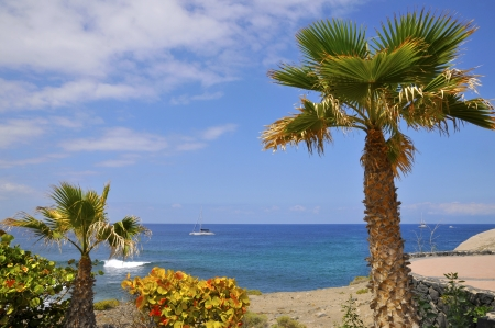 adeje: Palm tree, shrub coccoloba and sea with a boat on the costa Adeje of the southwest part of Tenerife in the Spanish Canary Islands