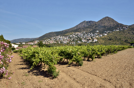commune: Vine in the Roses region, or Rosas, and the hinterland in the background. Roses is a commune on the Costa Brava at northeastern Catalonia in Spain Stock Photo