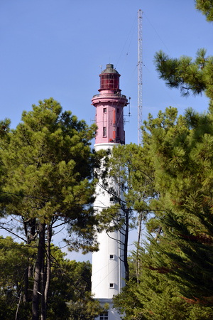 aquitaine: Lighthouse Among the pine forest at commune in the Gironde department CapFerret in southwestern France