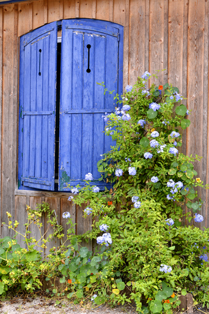 red shutters: Closeup blue shutters were wood house and flowers genus nasturtium red and blue plumbago in the bay of Arcachon in France