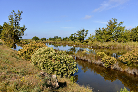 gironde department: Marshes in the Bay of Arcachon near Audenge, common in the Gironde department in southwestern France Stock Photo