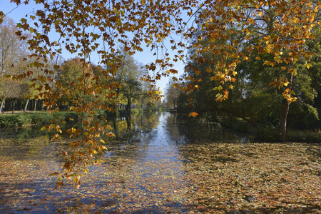 Pond and trees with fall foliage in France in department Ile-de-France Stock Photo