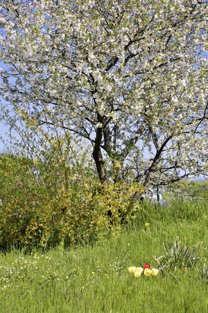 flowery: Flowery tree and bush at spring Stock Photo