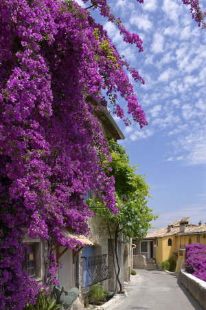 alpes maritimes: Village of Le Haut de Cagnes sur Mer with a beautiful red bougainvillea in southeastern France, department Alpes Maritimes