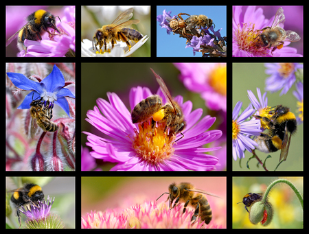 speeder: Ten mosaic pictures bees and bumblebees Stock Photo