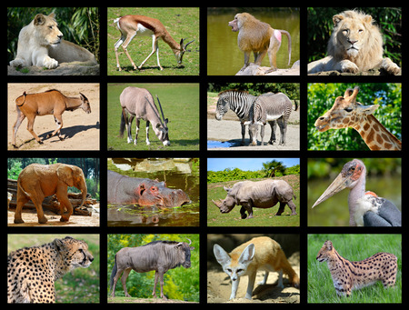 Sixteen mosaic pictures of African animals