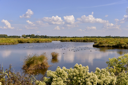 gironde department: Marshes in the Bay of Arcachon near Ares, common in the Gironde department in southwestern France