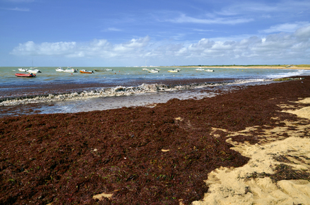 Beach of Sion-sur-Oc? ? an Invaded of red seaweed with boats on the sea. Commune in the Vend? ? e department in the Loire Valley area in western France