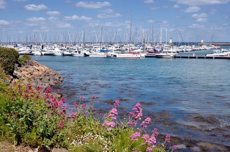 Port of Haliguen at Quiberon with the red valerian flowers in the foreground. Quiberon is a commune in the Morbihan department in Brittany region in north-western France