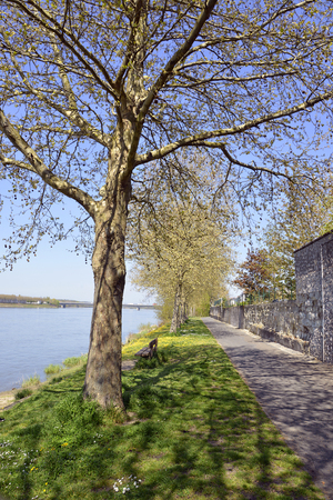 The banks of the Loire river at Saumur with trees, commune in the Maine-et-Loire department, Pays de la Loire region in western France. Banque d'images