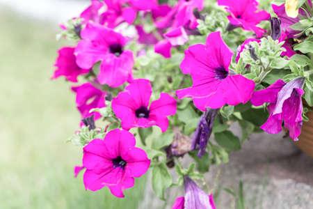 beautiful flower in bloom time