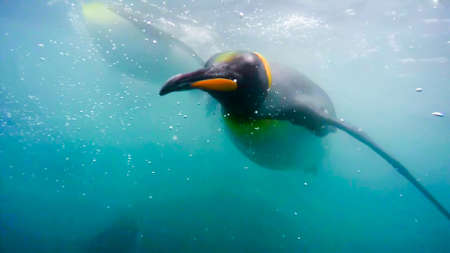 penguin in the wild nature water