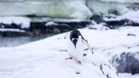 a beautiful adorable penguin bird cute