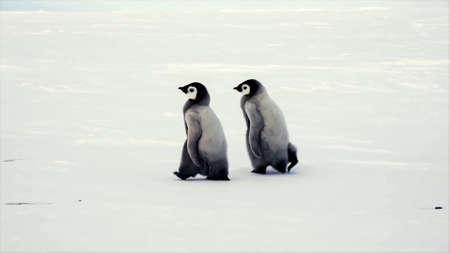 beautiful penguin birds real photo