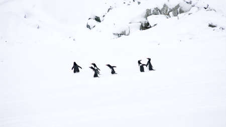 penguins walking on the ice in extreme cold pole Stock Photo