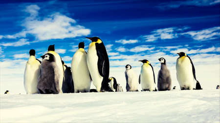 a family of penguins standing up in the nature homeland