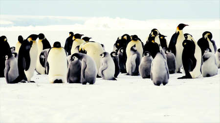 penguins in the north pole